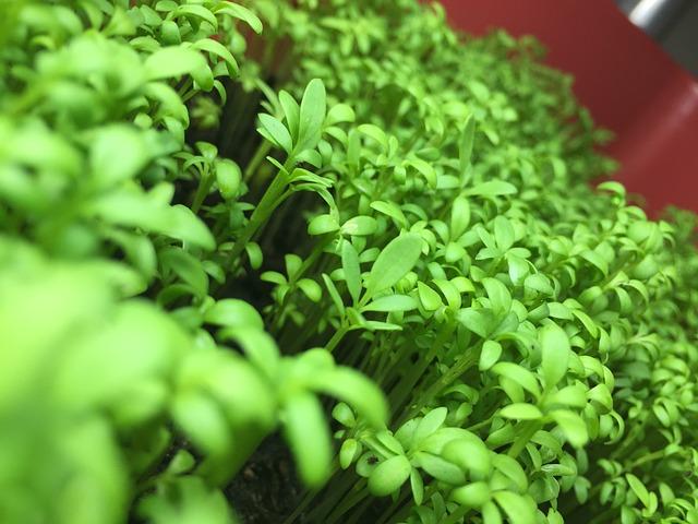 pěstování v zahradnictví