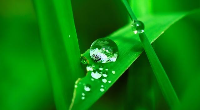 kapky vody na listech.jpg