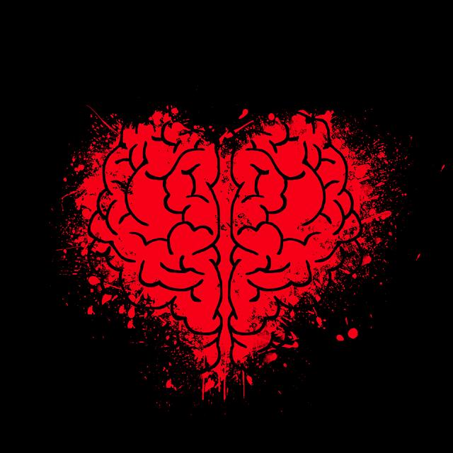 struktura srdce